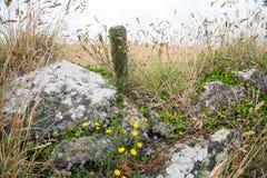 Sebe perto do porthgawwa em Cornualha, Reino Unido, Inglaterra fotografia de stock