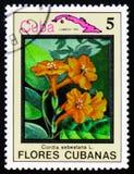 Sebestana Cordia και χάρτης της Κούβας, serie λουλούδια της Κούβας, circa 1 Στοκ Φωτογραφίες