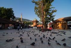 Sebilj в Сараеве Взгляд на главной площади в центре города ija ¡ arÅ  ¡ Ä Сараева BaÅ вполне с голубями рано утром стоковые изображения rf