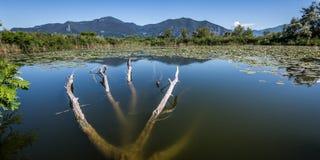 Sebino peat bog, Lombardy, Italy. Sebino peat bog, Brescia, Lombardy, italy royalty free stock photos
