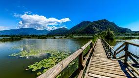 Sebino wetland Royalty Free Stock Photo