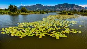 Sebino wetland Stock Photography