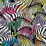 Sebra med färgrika konturdjurlivdjur, royaltyfri illustrationer