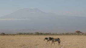 Sebra två och mt-kilimanjaro på amboselien i Kenya royaltyfri bild