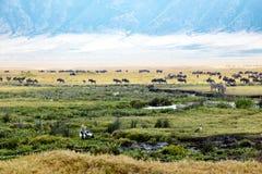 Sebror gnu, flodhästar, fåglar på afrikanska djur för Ngorongoro krater tillsammans Royaltyfria Foton