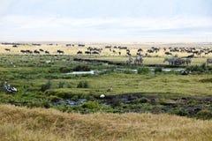 Sebror gnu, flodhästar, fåglar på den Ngorongoro krater Arkivfoton