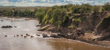 Sebror och gnu under flyttning från Serengeti till Masai M arkivfoto