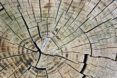 Secção transversal da madeira Fotografia de Stock Royalty Free