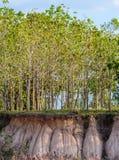 Secção transversal da terra Fotos de Stock