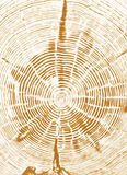 Secção transversal do coto de árvore Fotos de Stock