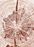Secção transversal do coto de árvore Imagens de Stock Royalty Free
