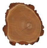 Secção transversal do tronco de árvore Fotos de Stock