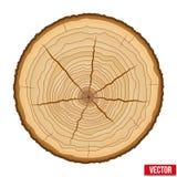 Secção transversal do tronco de árvore Vetor Fotos de Stock
