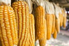 Sec du maïs Photos libres de droits