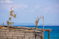 Sec Peix рыба высушенная ветром типичная от Балеарских островов Стоковое Изображение