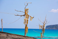 Sec Peix рыба высушенная ветром типичная от Балеарских островов Стоковое Изображение RF
