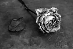 Sec s'est levé sur la vieille texture de cuivre photographie stock