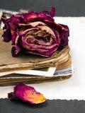 Sec se sont levés, le vieux livre et la photographie vide Photographie stock