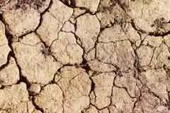 Sec vers le haut de la terre criquée avec une plante verte cassée Sécheresse et la créature vivante dans le désert Oasis et survi photos libres de droits