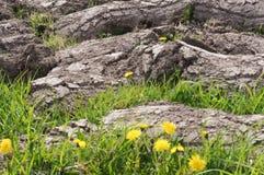 Seca nos campos, terra virgem arado fotos de stock