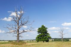 Secado acima da árvore Foto de Stock Royalty Free