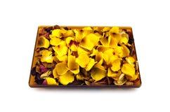 Secado aumentaram as folhas isoladas no branco Imagens de Stock Royalty Free