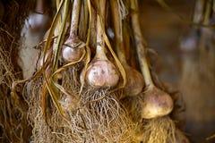 Secado del ajo en una vertiente de madera Imagen de archivo