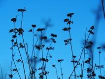 Secado encima de las flores Foto de archivo libre de regalías