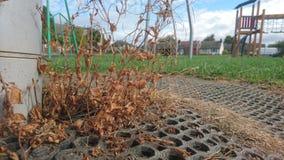 Secado encima de las malas hierbas que crecen fuera de algo de estera fotografía de archivo libre de regalías