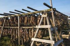 Secador dos peixes, cabeças dos peixes e espinhas dorsais de madeira, Islândia Fotos de Stock