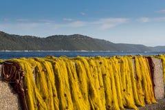 Secagem amarela da rede de pesca na luz solar Fotos de Stock