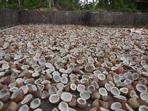 Secagem da copra do coco na luz solar Imagem de Stock Royalty Free