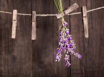 Secagem das ervas da alfazema Imagem de Stock Royalty Free