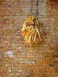 Secagem das espigas de milho Fotografia de Stock Royalty Free