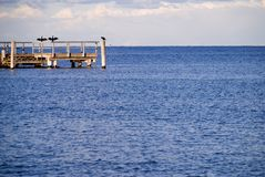 Secagem de Kormoran na costa Foto de Stock