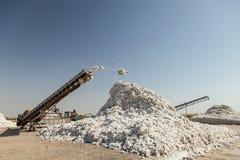 Secagem do algodão Imagens de Stock