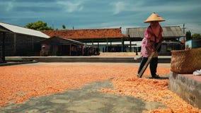 Secagem do camarão na terra em Cilacap, Java, Indonésia video estoque