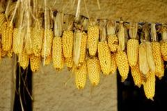 Secagem do milho de uma corda fotos de stock royalty free