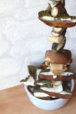 Secagem dos cogumelos na corda Fotografia de Stock Royalty Free