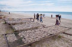 Secagem dos peixes Fotografia de Stock