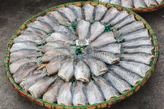 Secagem dos peixes no sol Fotografia de Stock Royalty Free