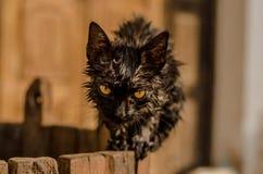 Secagem ele mesmo do gato no sol irritado com alguém que banho ele Imagens de Stock Royalty Free