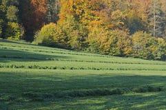 Secagem segada da grama no prado montanhoso fotografia de stock