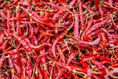 Secagem vermelha das vagens dos pimentões Fotografia de Stock Royalty Free