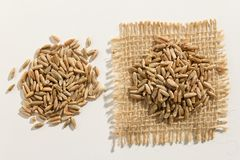Rye cereal grain. Close up of grains spreaded over white table. Secale cereale is scientific name of Rye cereal grain. Also known as Centeio portuguese and Royalty Free Stock Images
