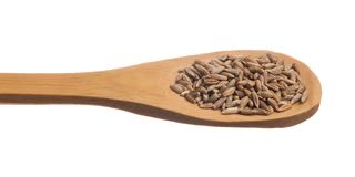Rye. Secale cereale is scientific name of Rye cereal grain. Also known as Centeio portuguese and Centeno spanish. Grains over wooden spoon, isolated white Stock Image
