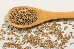 Rye cereal grain. Healthy grains on a wooden spoon. White backgr Stock Photography