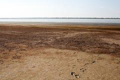 Secando acima o estuário com lama cura e algas vermelhas no por do sol fotos de stock