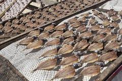 Secando e vendendo peixes em Nazare fotografia de stock