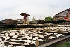 Secando peixes salgados Foto de Stock Royalty Free